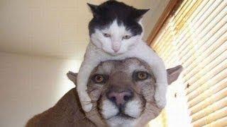 Видео про кошек. Кошки приколы. Забавные кошки.