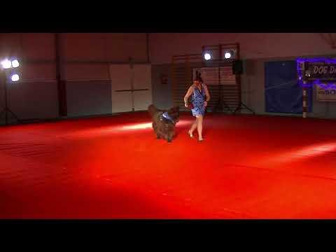 DOG DANCING SHOW 2018 : Mélo & Mickey