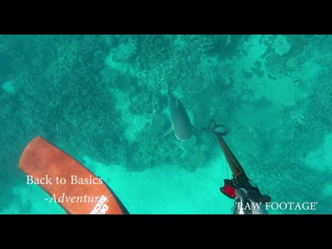 Amazing Fishing Biggest Fish in india - Fishing in My Village | Must watch | from YouTube · High Definition · Duration:  2 minutes 6 seconds  · 78.000+ views · uploaded on 22.01.2017 · uploaded by Good Standing
