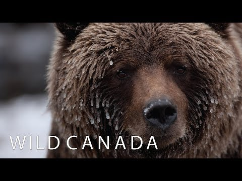 Wild Canada | Coming to CBC Docs