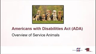 Overview of Service Animals