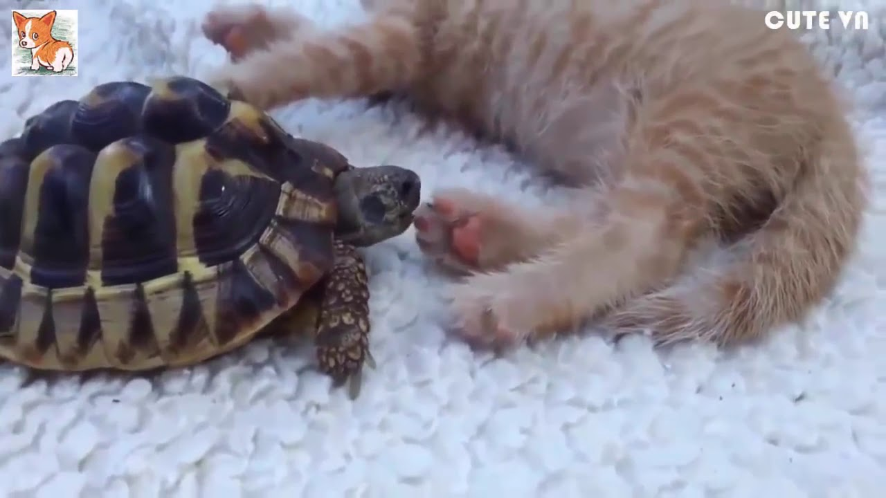►Funny And Cute Animals Videos Compilation 2016 HD #2   Cute VN
