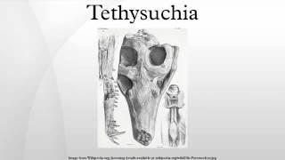 Tethysuchia