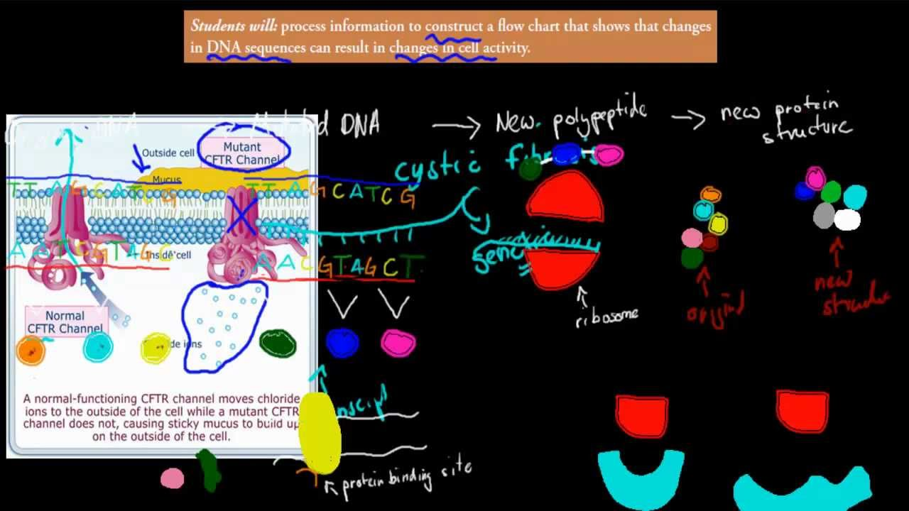 7 changes in cell activity flowchart hsc biology youtube changes in cell activity flowchart hsc biology ccuart Choice Image