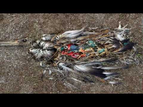 Great Pacific Garbage Patch Awareness Video