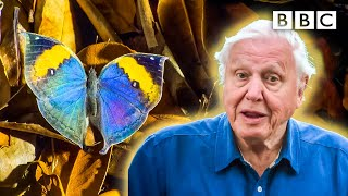 David Attenborough meets some very clever insects 🐞🦋 BBC