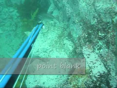 Spearfishing - Northern Beaches / Long Reef