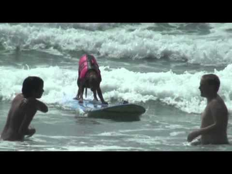 Surfing Dogs Just want to have fun!