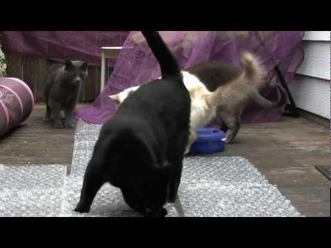 Кошки против упаковки