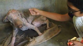Unglaubliche Verwandlung: Tierschützer retten diesen Hund nicht nur, sie erwecken ihn zum Leben