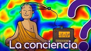 ¿Eres el único ser consciente? - CuriosaMente 135