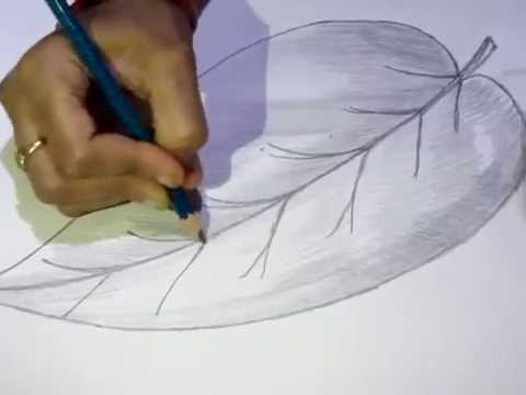 How to Draw or Sketch Simple Plane Leaf #1