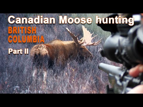 Canadian Moose Hunting in British Columbia – Part 2 /2020
