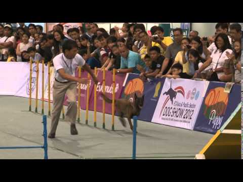 2012 FCI Asia Pacific Section Show - Agility Trials