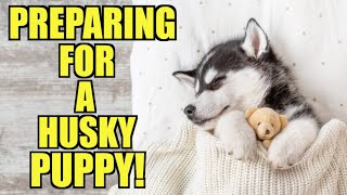 How To Prepare For Bringing Home A Siberian Husky Puppy - (5 THINGS YOU MUST KNOW!)