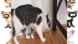 Кот и скотч xvid Кошки приколы водевильный котэ