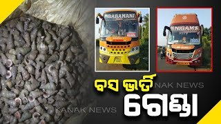 Sacks Containing Snail Seized From A Bus In Balasore, 6 Held For interrogation