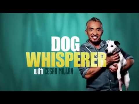 Dog Whisperer Season9 12 Cesar s Worst Bite