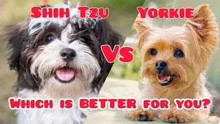 Shih Tzu vs Yorkie (Which is Better for You?)