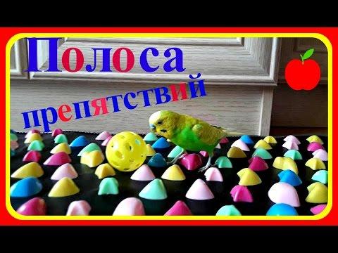 Полоса препятствий для ПОПУГАЯ № 1//Приколы с волнистым попугаем//Смешной попугай