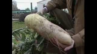 Скачать Настоящий хозяин Вертикальные сады Душистый горошек Серия русский размер