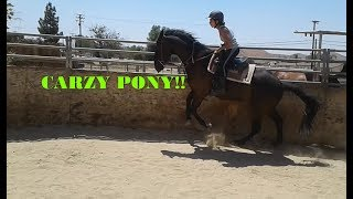 Download Video Riding ex-Racehorse|| CRAZY PONY MP3 3GP MP4