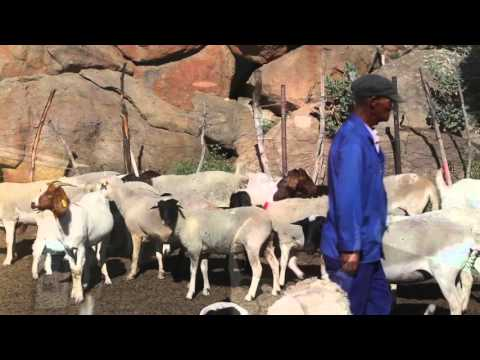 Adaptation Fund 'Direct Access' Reaches South African Communities