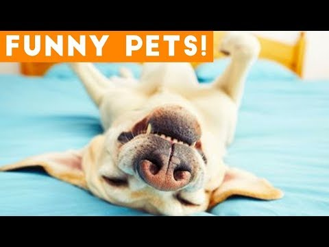 Funny ANIMALS Doing Things! | Funny Vines October 2018