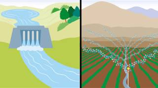 Antamina gestiona el agua eficientemente y siembra bosques