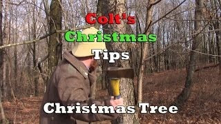 Colt's Christmas Tips - Christmas Trees