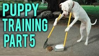 How to potty training a puppy part 5