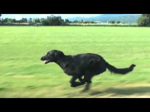 Slow Motion Dog Run