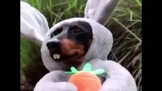Смешные собаки в костюмах, смешные собаки прикол
