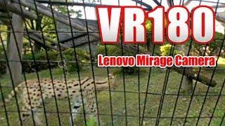 [VR180] 多摩動物園 サーバル VR [Mirage Solo Camera]