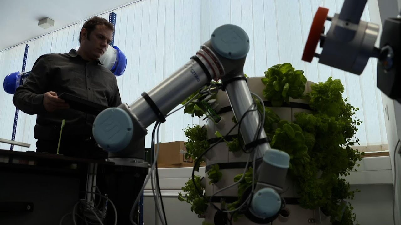 Hungary: Harvesting Robot Developed For Hydroponics Plants