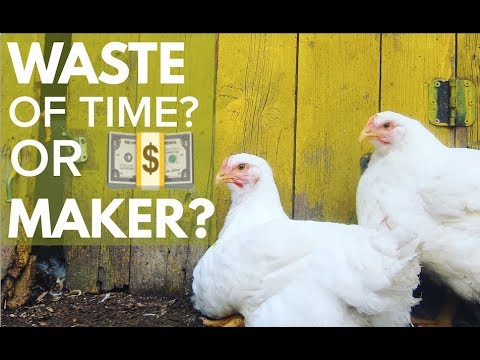 RAISING CHICKENS FOR MONEY... A WASTE OF TIME? (and other homesteading questions answered)