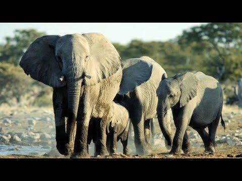 National Geographic Documentary elephant