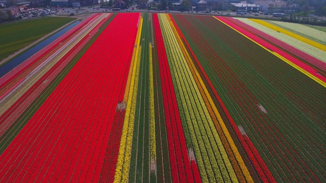Tulpen velden  YouTube
