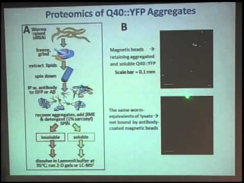 """Protein Aggregation, Aging, and Neurodegeneration"" - Dr. Robert J. Smookler Reis"