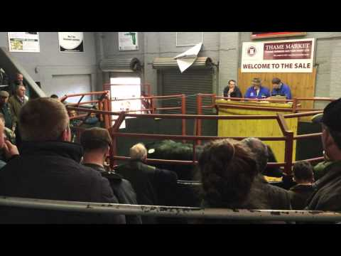 Thame Farmers Market | David Morris | Cattle Sale | November 2015