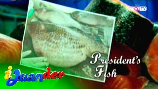 iJuander: The most expensive fish in the Philippines, Ludong
