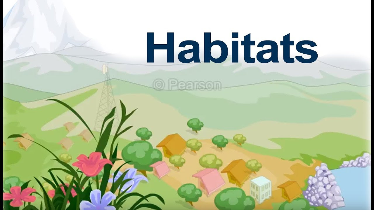 hight resolution of Class 4 Science   Learn about Habitats Around Us   Animal Habitats   Plant  Habitats   Pearson - YouTube