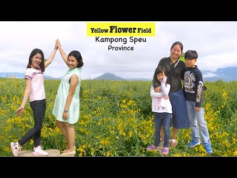 Travel to Yellow Flower Field at Thpong District in Kampong Speu Province | The Most Tourist Attract