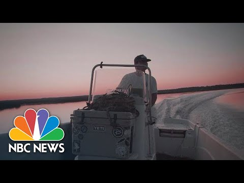 They're Almost All Dead: Oyster Farmers In Florida Hit Hard By Hurricane Michael | NBC News