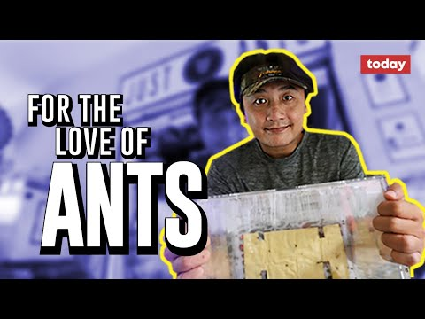 For the love of ants - YouTube