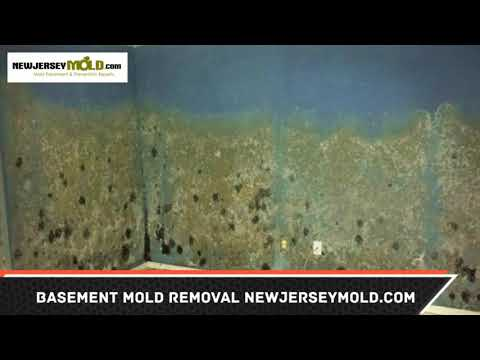 basement-mold-removal-brielle-nj
