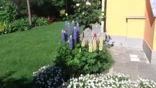 Il mio giardino #18 - 05/05/2014