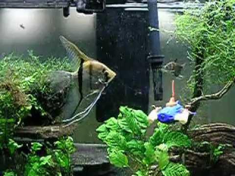 Aquarium Submarine
