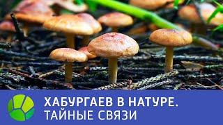 Тайные связи - Хабургаев в натуре | Живая Планета