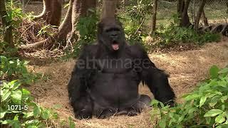 Dank Animal Memes Compilation #3